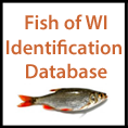 Fish of Wisconsin Identification Database