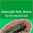 Emerald Ash Borer Information